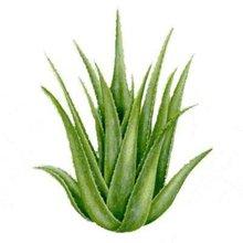 Aloe vera juice, aloe vera gel and all kind of aloe vera's raw materials