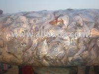 On board frozen Trash/Rough Fish