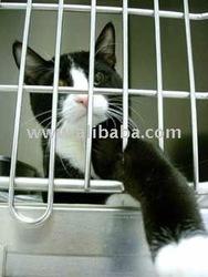 tempat penjagaan kucing mini