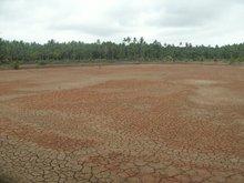Fish Pond With Coconut Farm