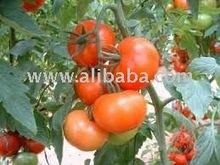 Tikiri Brand Tomatos