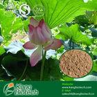 Lotus Leaf P.E.,Natural Slimming Nuciferine Powder, Herb Slim