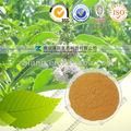 De alta qualidade Herba Lycopi extract / brilhante Bugleweed Herb