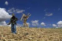 Sugar Cane Bagasse for sale