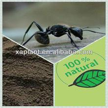 black ant extract powder