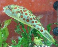 peway live tropical fish