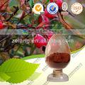 Natural extraído de dahurian rose frutas ~anti- la fatiga
