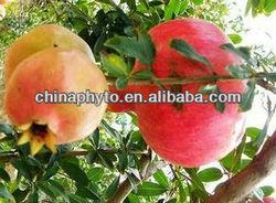 Ellagic Acid Powder 90%/Pomegranate Extract/Whitening skin