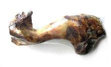 Dried Pork Bone - PET FOOD