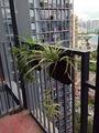 سرخس مع الأخضر-- ميني بار الأخضر-- نظام الجدار أكياس الحديقة