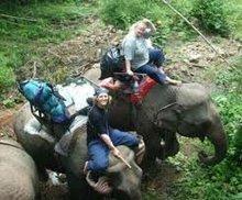 Elaphant Ride And Biking Adventure In Laos
