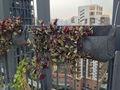 a cebolinha com o plantio de vida ao ar livre da parede bolso plantadores
