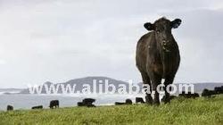 Halal and Organic Beef