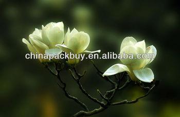 High quality wild Magnolia Extract