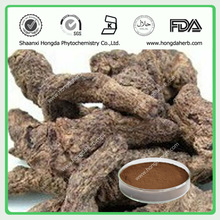 New Product Rehmannia Root Extract