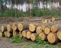 Oak, spruce, pine logs