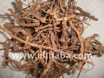 cryptolepis sanguinolenta (Ghana quinine)