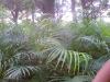 pam plants