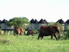 6 Days and 5 Nights, Kenya Wilderness and Tented Camp Safari