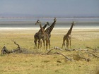 9 Days and 8 Nights ,African Adventure and Sightseein, Kenya Wildlife and Tented Camp Big Five Private Safari