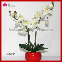 House Wedding Orchids Plant Wholesale Table Flowers Arrangement