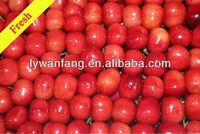 China fresh cherry/sweet cherry/red cherry