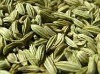 Green Fennel Seeds