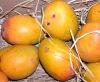 Mangos fruit