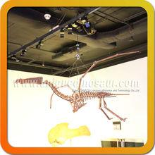 Pterosaur Flying Skeleton Model For sale