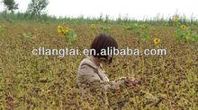 Chifeng Xin Langde.Buckwheat Grain