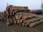 "Northern Black Ash Veneer Logs 13"" & Bigger"