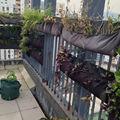 Com a cebolinha verde mini- sistemas de parede projeto de um jardim de bolso
