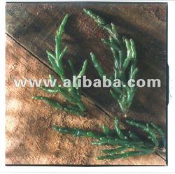 Salicornia seeds