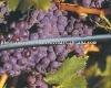 Pressure Compensation Drip Irrigation Hose