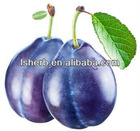 100% Natural Plum Fruit Extract 10:1