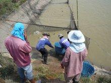 Catfish Farm