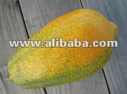 red lady 786 papaya