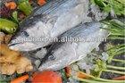 sarda fish for canned seafood (eastern little tuna)