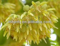 100% Pure Tilia Cordata Flower Extract