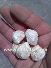 Candlenuts / Kemiri