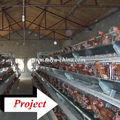 Jaula en hilera automática para pollos y aves domésticas Taiyu uganda (todo el material completo para aves domésticas pertenecen a un agente extranjero)