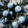 100% Berry Juniper Essential oil