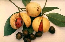 Nutmeg with/without shell,mace,seed ABCD