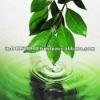 Natural Leaf Fragrance