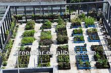 string bean with Green-bar Square gardening planter