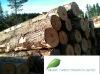 New Zealand Radiata Pine Logs - A Grade