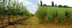 fruit nursery