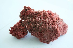 Natural Sea Corals Red from Socotra Island in Yemen