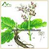 Best Quality Rheum P.E. Emodin,Rhein, Chrysophanol 20%-98%