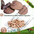 ganoderma lucidum pó entidades cápsulas